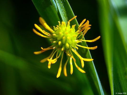 Blumenzauber 80