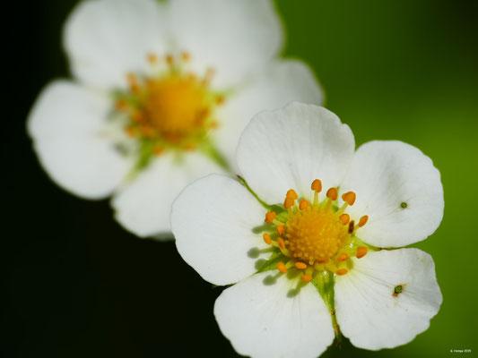Blumenzauber 45