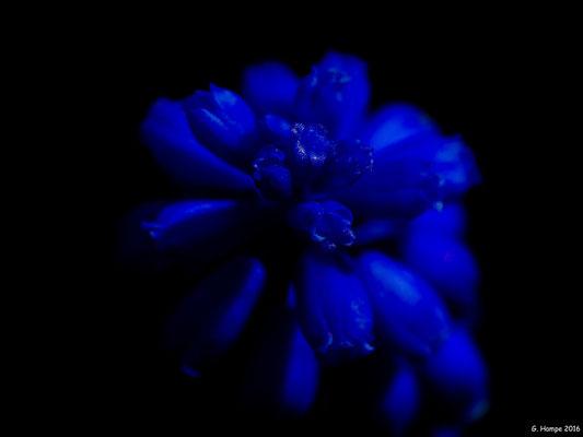 Blumenzauber 13