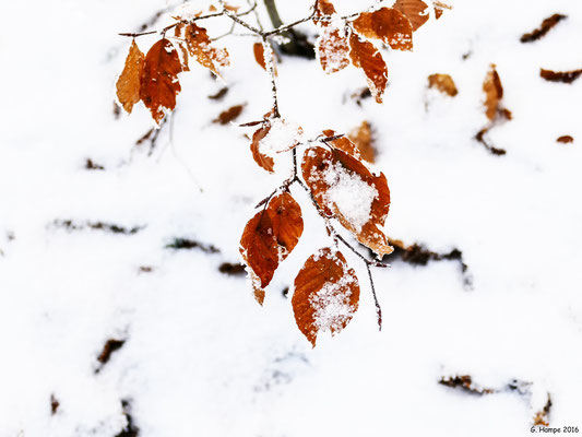 Winterblätter 3