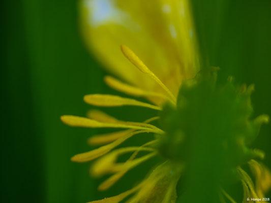 Blumenzauber 75