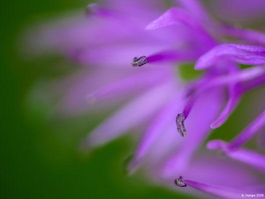 Blumenzauber 72