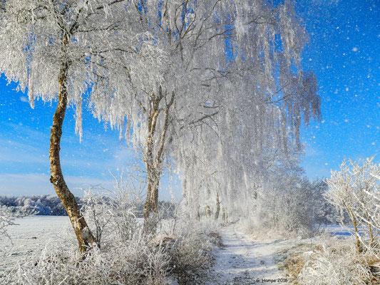 Winterland 40