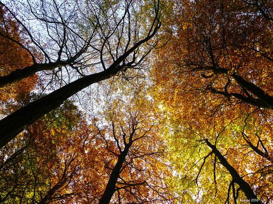 Herbstwald 12