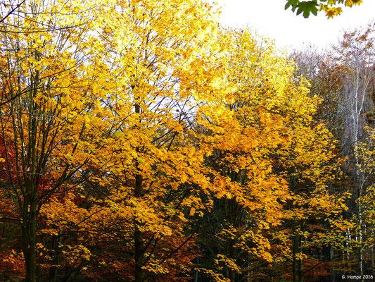 Herbstwald 44