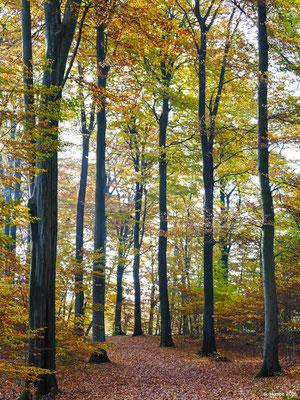 Herbstwald 18
