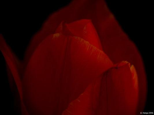 Blumenzauber 34
