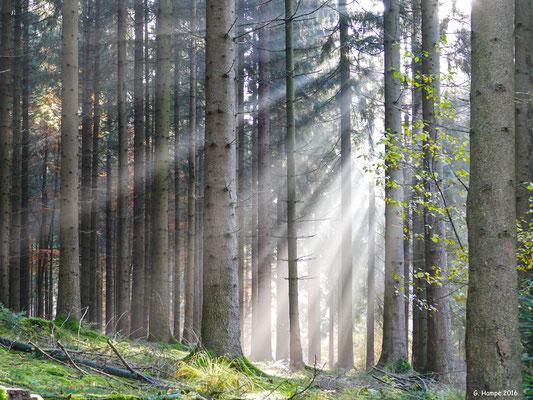 Herbstwald 51