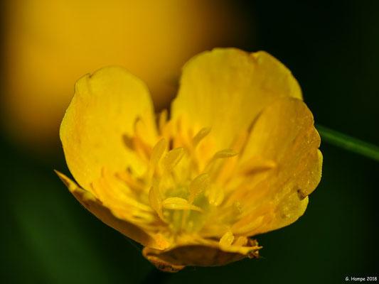 Blumenzauber 78