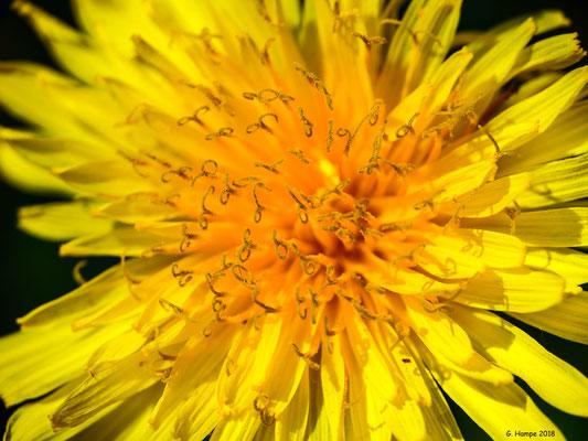 Blumenzauber 65