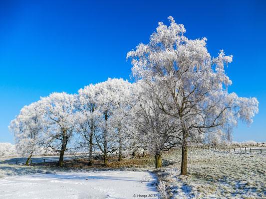 Winterland 50