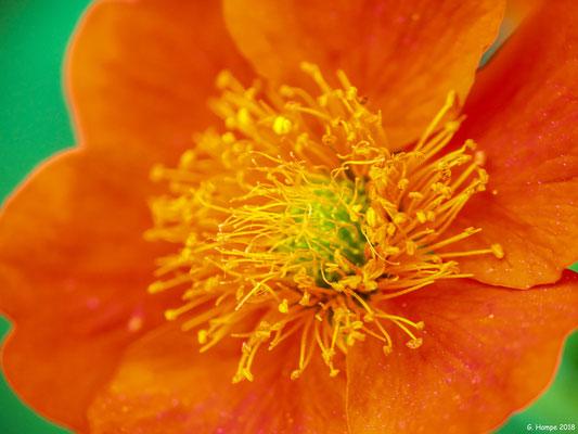 Blumenzauber 67