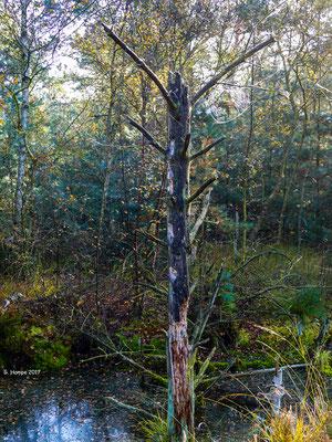 Tister Moor 29