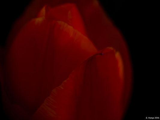 Blumenzauber 33