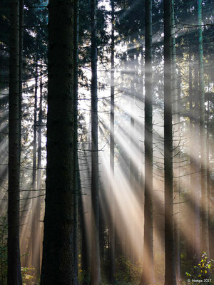 Herbstwald 5