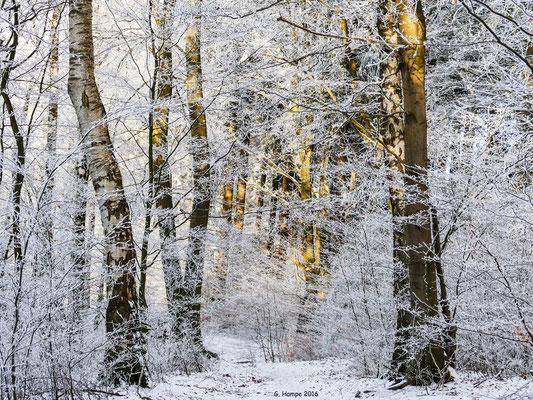 Winterland 2