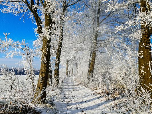 Winterland 29