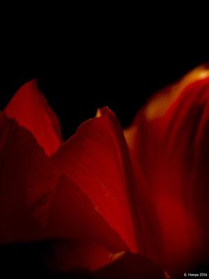 Blumenzauber 21