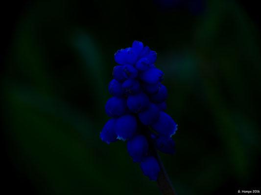 Blumenzauber 38