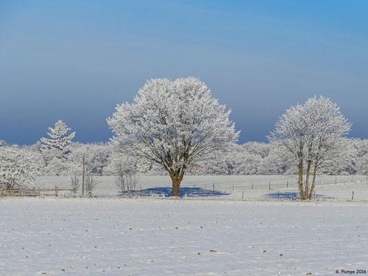 Winterland 46