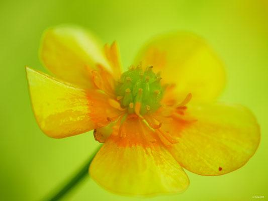 Blumenzauber 52
