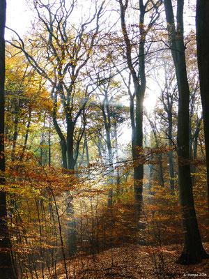 Herbstwald 23