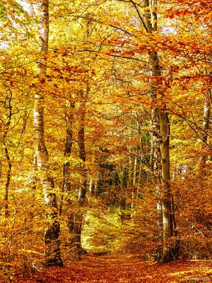 Herbstwald 41