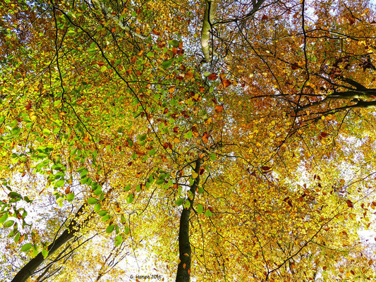 Herbstwald 46