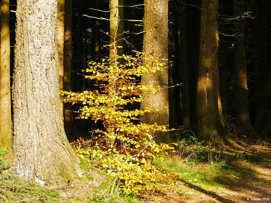 Herbstwald 48