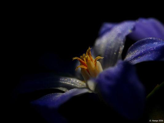 Blumenzauber 36