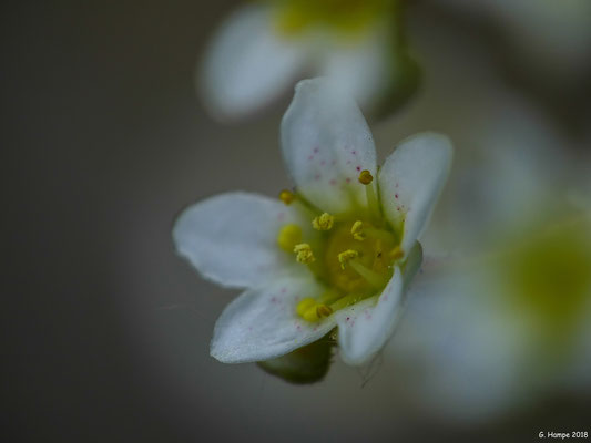 Blumenzauber 62