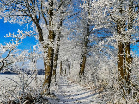 Winterland 28