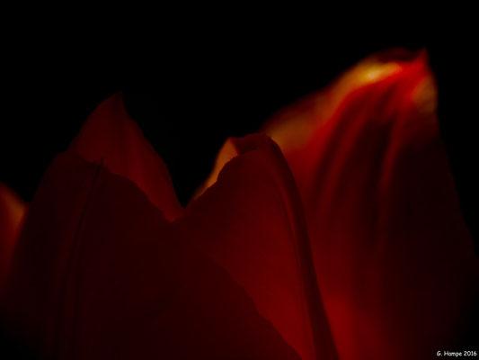 Blumenzauber 20