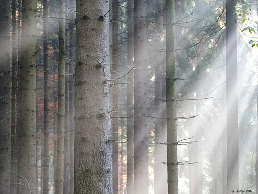 Herbstwald 52