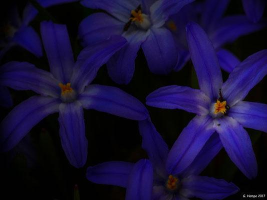 Blumenzauber 1