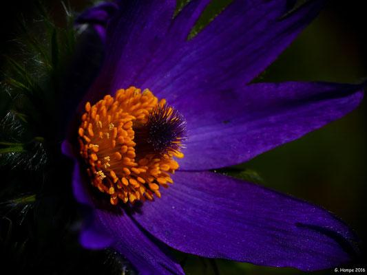 Blumenzauber 25
