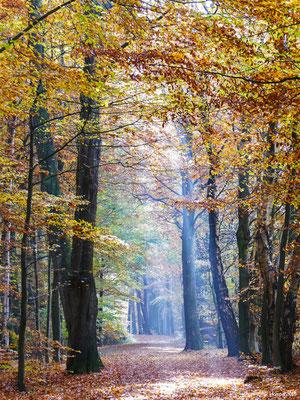 Herbstwald 29