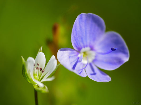 Blumenzauber 53