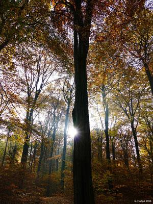 Herbstwald 28