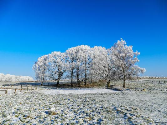 Winterland 49