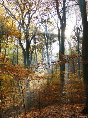 Herbstwald 22