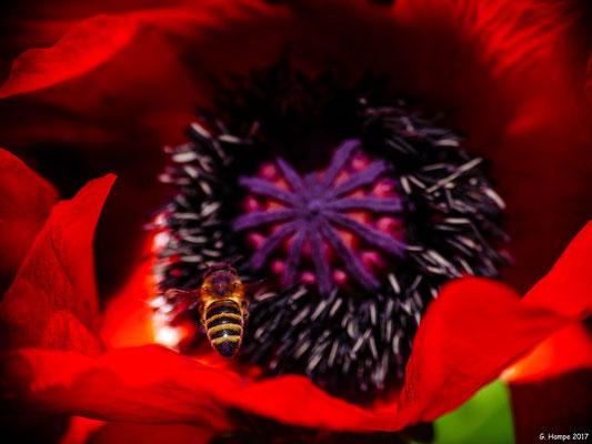 Blumenzauber 9