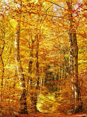 Herbstwald 42