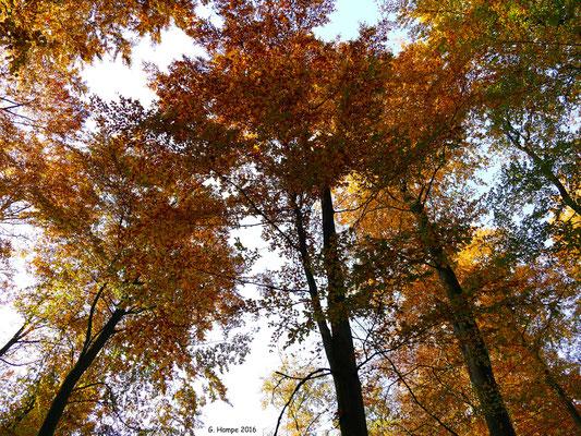 Herbstwald 47