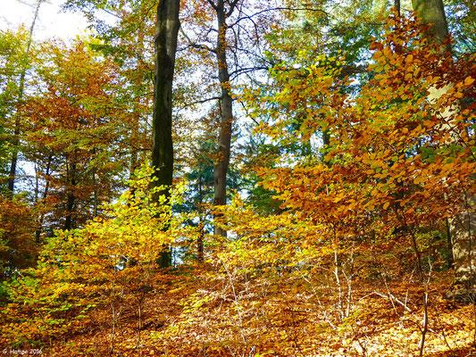 Herbstwald 24