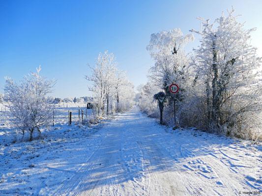 Winterland 21
