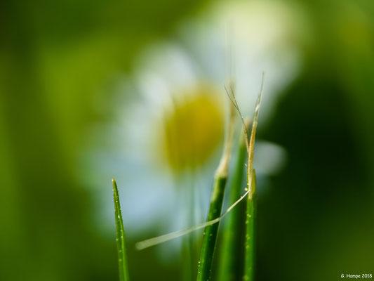 Blumenzauber 83