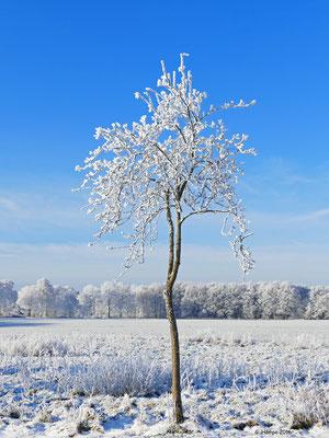 Winterland 18