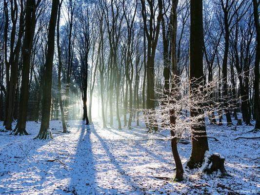 Winterland 10