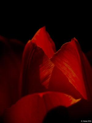 Blumenzauber 24